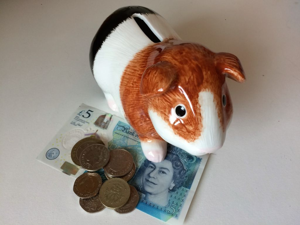 Guinea pig money box