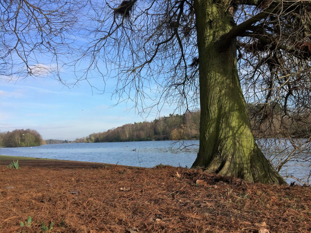 Lake at Clumber Park, Nottinghamshire