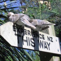Wildlife Park, Christchurch, New Zealand