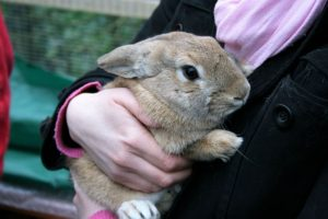 Rabbit having a cuddle