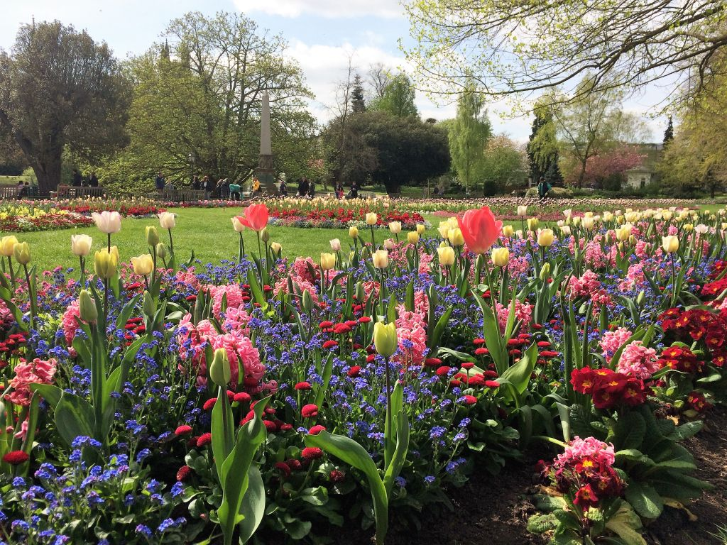 Tulips and hyacinths in a park