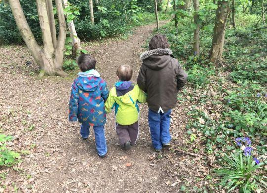 My three boys walking through woodland