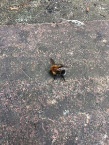 A tree bee on the ground.