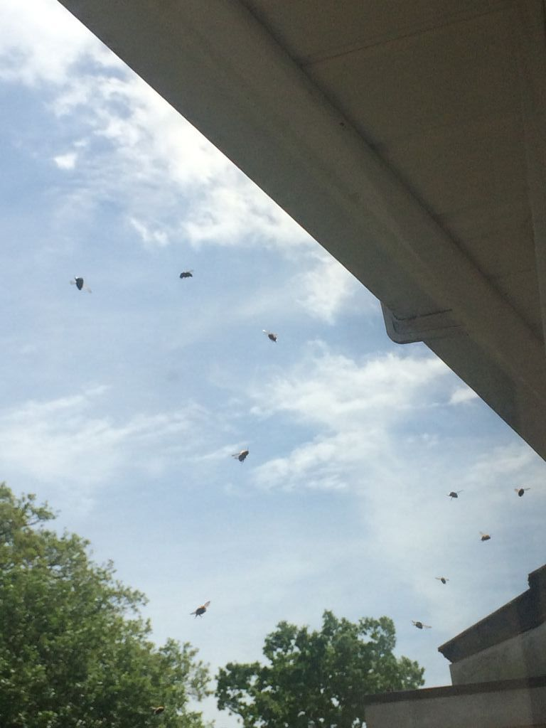 Bees flying around the entrance to their nest as seen from inside our house.