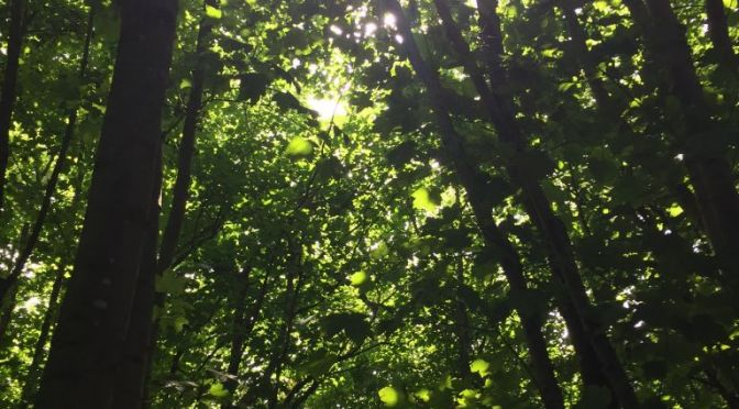 Sunlight streaming through a canopy of trees