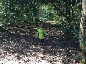 Boy walking through wood
