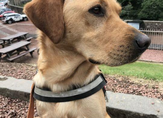 Dog at New Lanark