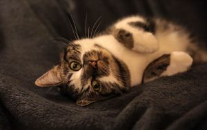 Jonsi cat
