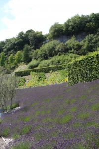 Lavendar and sunflowers at the Eden Project