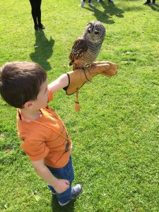 Meeting an owl