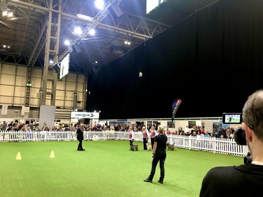 Top Dog Arena