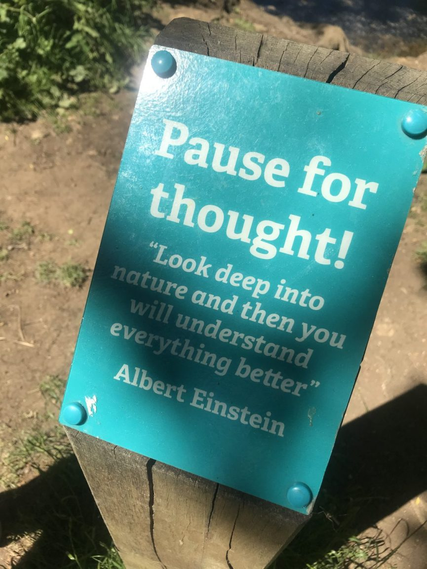 Pause for thought - Albert Einstein