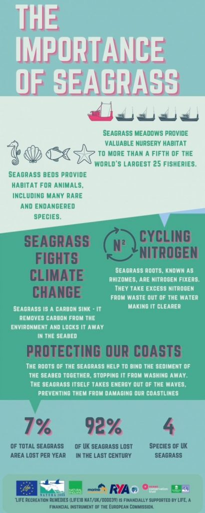 Seagrass infographic