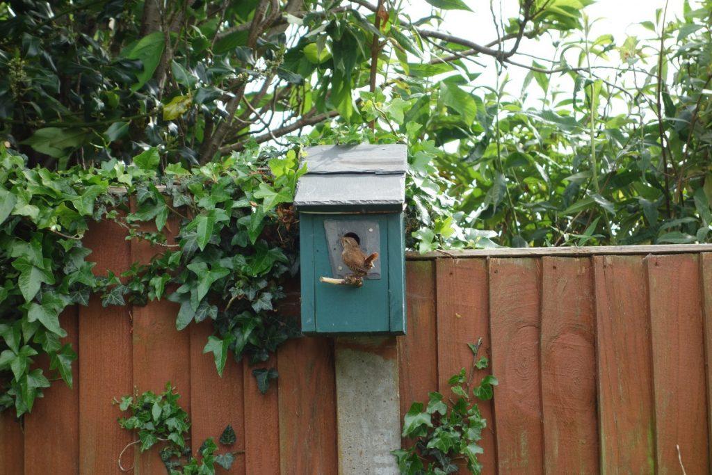 Bird box in use